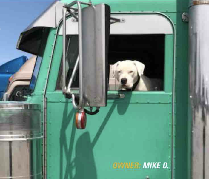 Trucking Pets Own the Road in 2018